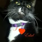Boni Maroni loves Edsel the Pooch