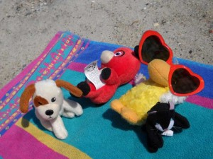 me and my pets at the beach