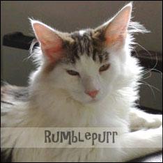 rumblepurr