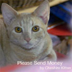 Please Send Money Book