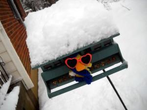George at the snowy birdfeeder