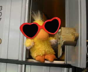 George the Duck looking in the po box