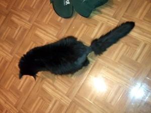 Pepi the Cat's Bottle Brush Tail