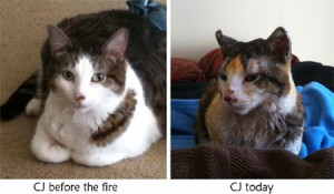 CJ Before and After the Fire