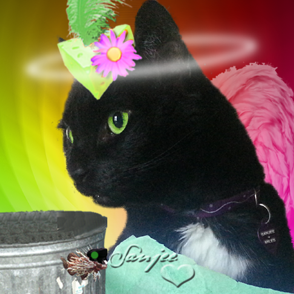 Sanjee for St. Patrick's Day